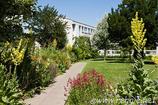 10017605_flower_borders_kaetsu_centre_murray_edwards_college_cambridge-600